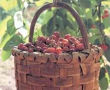 Productos Tradicionales - Cerezas del Hornillo