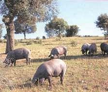 Productos Tradicionales - Porcino