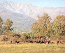 Productos Tradicionales - Quesos de cabra