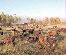 Productos Tradicionales - Queso fresco de cabra