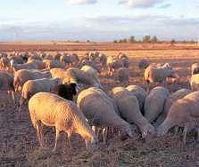 Productos Tradicionales - Queso de oveja
